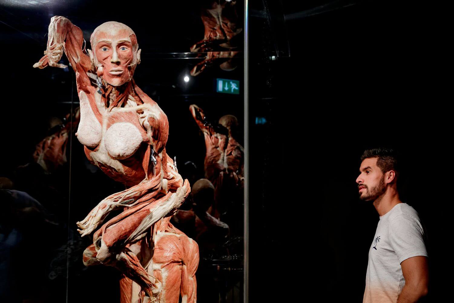 Amsterdam Tour Body Worlds Fast Track Entry